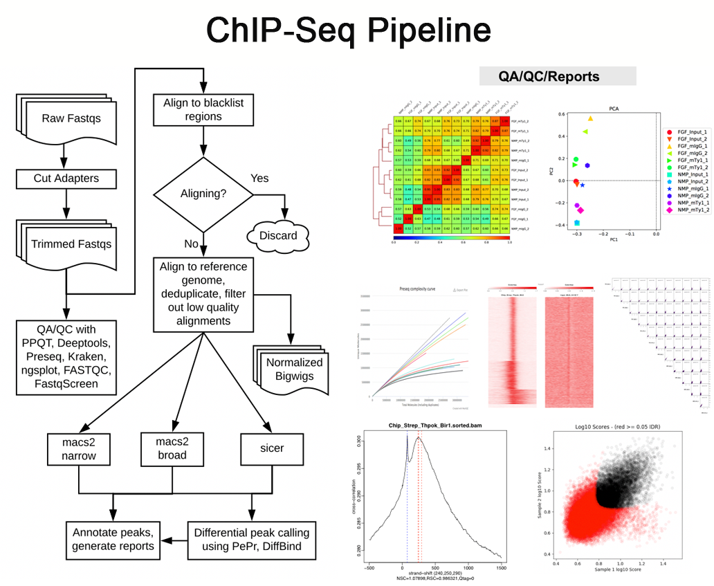 Chip-Seq pipeline overview