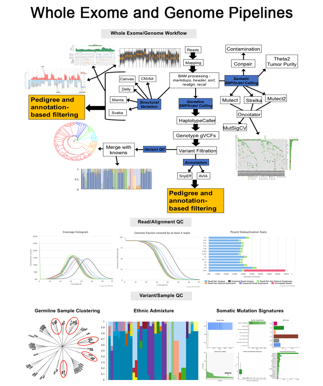 whole exome and genome pipeline overview