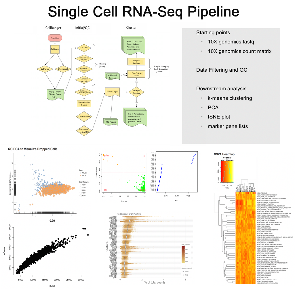 Single Cell RNA-Seq Pipeline